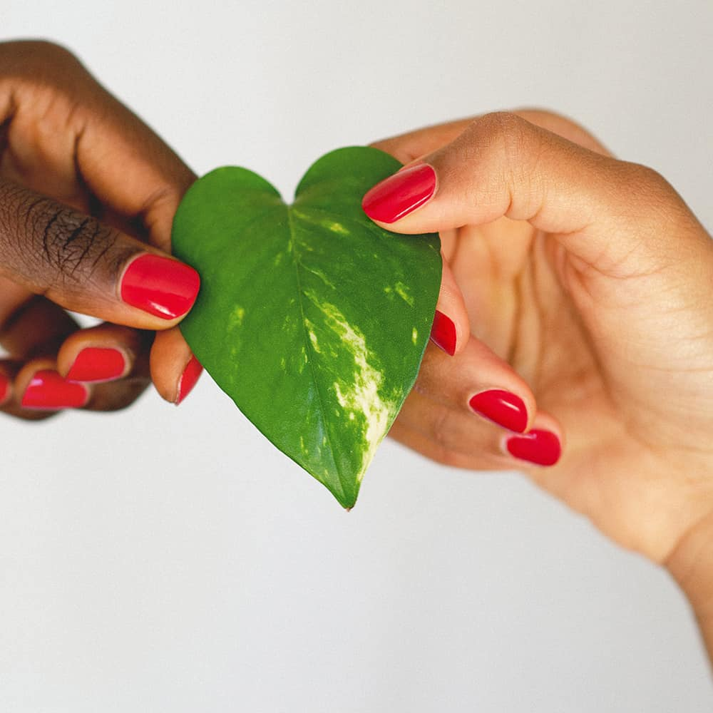 Dark and medium skin tone hands holding a heart shaped leaf and wearing apple red nail polish by sienna